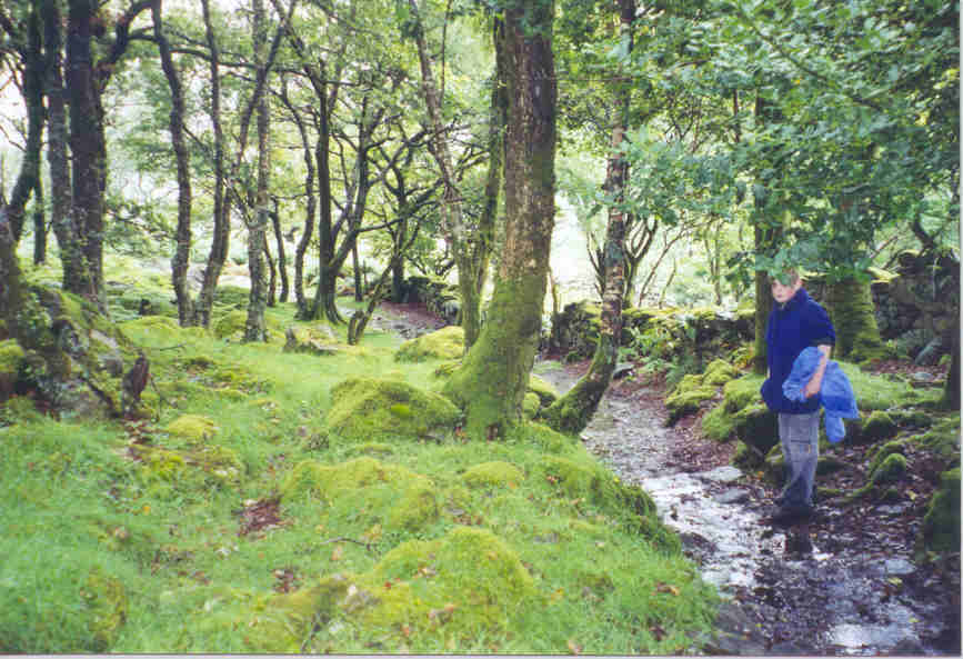 Hiking from Lake Cwm Bychan to the Roman steps